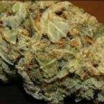indica vs sativa difference of high